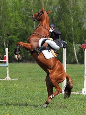 So, you want to become a professional rider? - The Grooms List