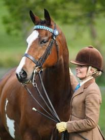 County Shows explained - patient ponies