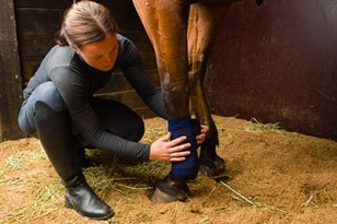 A Sneak Peak at an equine Employers Wish List - Genuine Interest