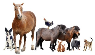A Sneak Peak at an equine Employers Wish List - Reasonable Baggage