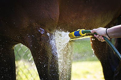 Eventing Grooms and Eventing Groom Jobs - Anyone can become an event groom