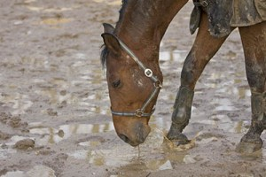 Getting winter ready in the equine industry - Mud Fever