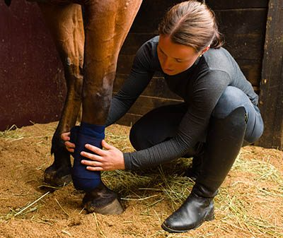 The Grooms List Apprentices Zone - How an Apprenticeship can Benefit Your Equine Career 1