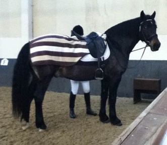 Keeping Your Equine Athletes Warm - Hannah Doggett - Ride-on or wrap-around exercise sheet