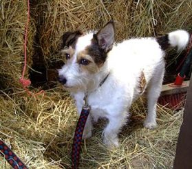 Yard Dog Etiquette - taking a dog to work - Keep on a lead or rope when necessary