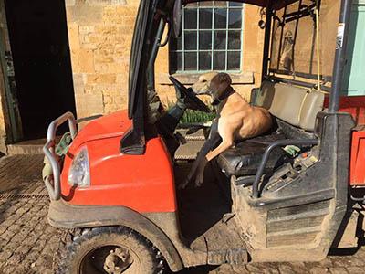 Yard Dog Etiquette - taking a dog to work - yard dog qualities