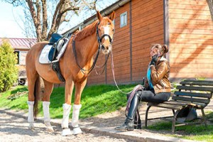 Is the Equine Industry getting tougher - A Grooms perspective - are grooms becoming lazy