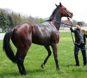 What's it like to work on a Pre-Training yard - Lively youngsters