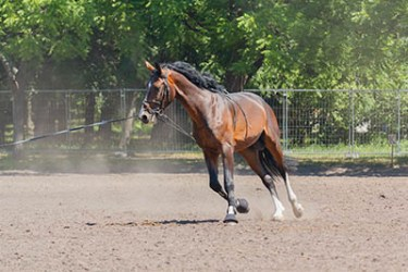 What's it like to work on a pre-training yard - Lunging