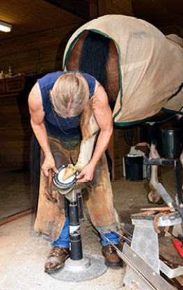 How to maintain a good relationship with the yard Farrier - Equine Professional - work with them