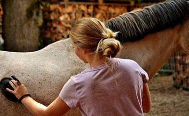 Treating Minor Horse Wounds - the very basics