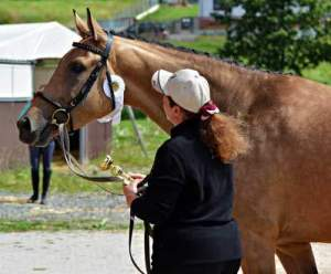 Coronavirus Affects Equine Recruitment - When not to hold an job interview