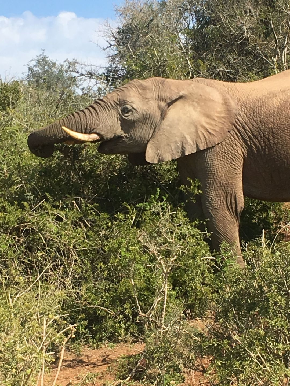 Addo Elephant National Park – South Africa