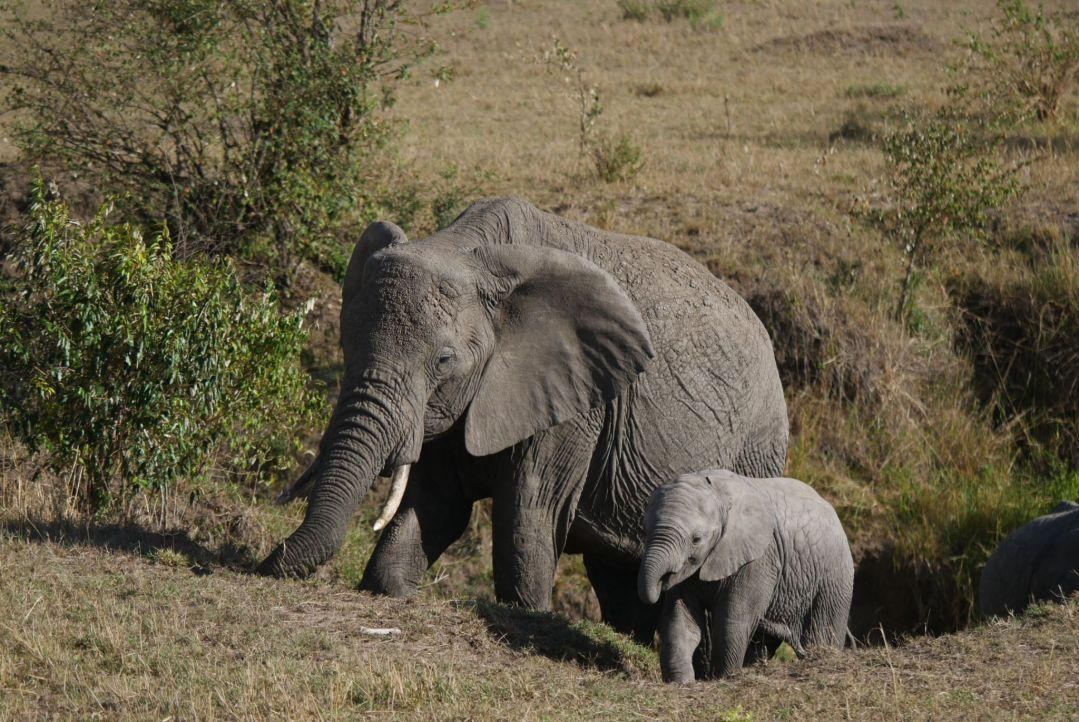 Top Tips for a Safari in Kenya