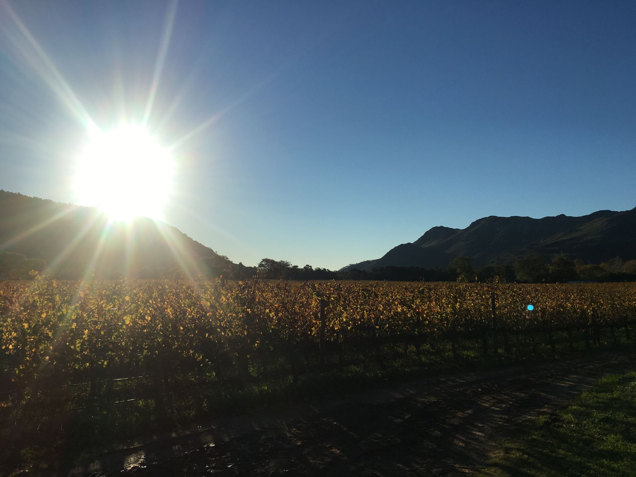 Vineyards_Franschhoek
