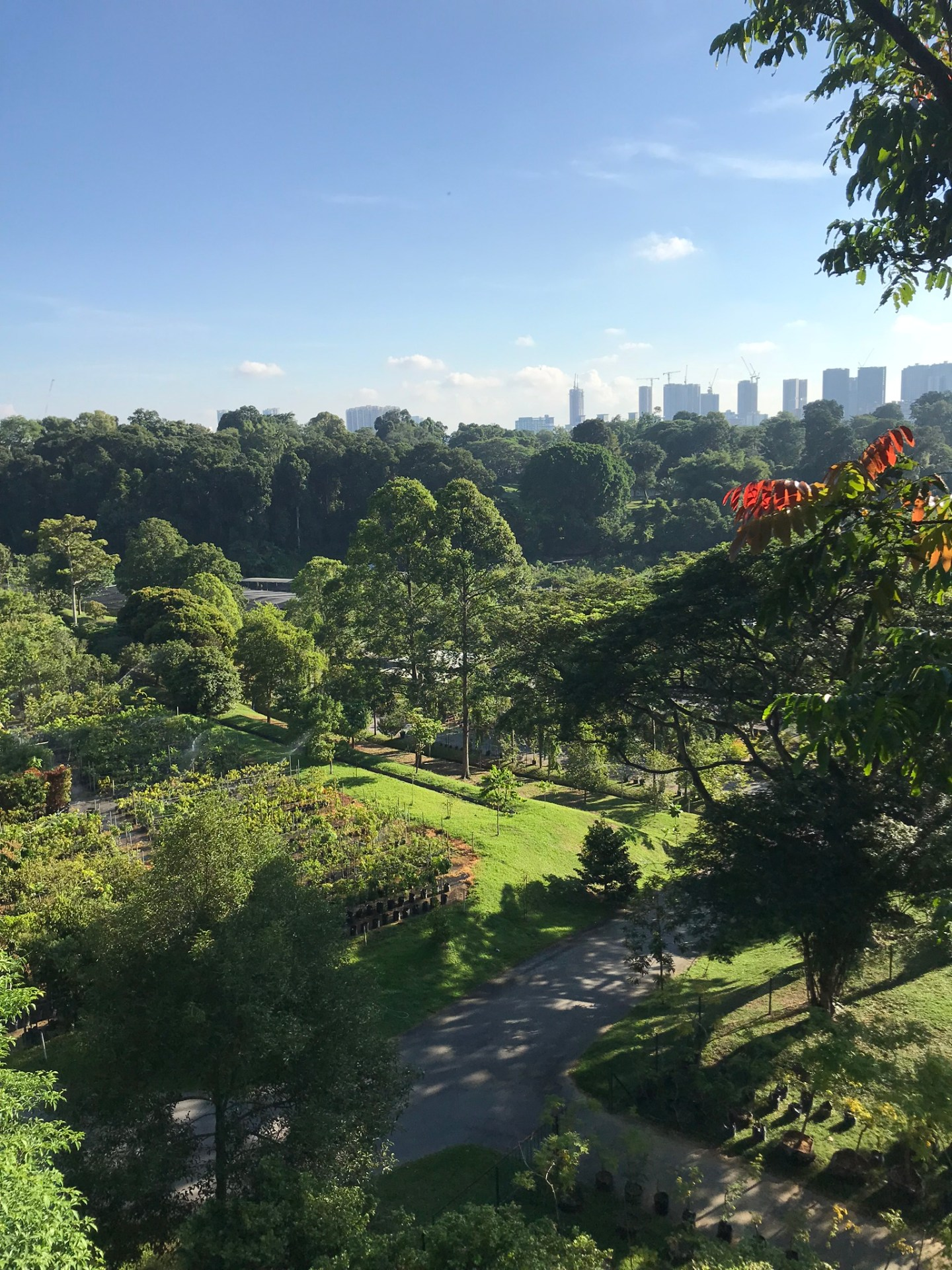 Views-from-the-Canopy-Walk