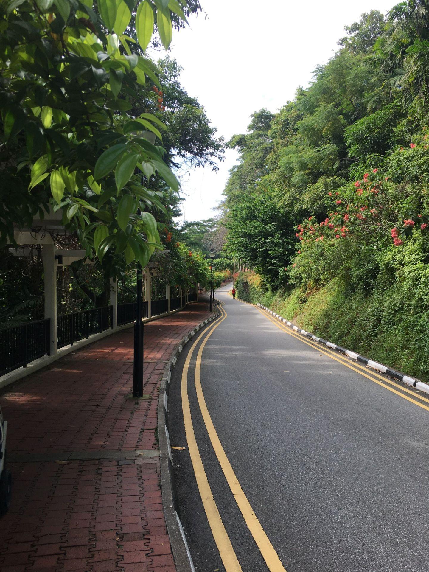 Walk-from-Faber-Peak