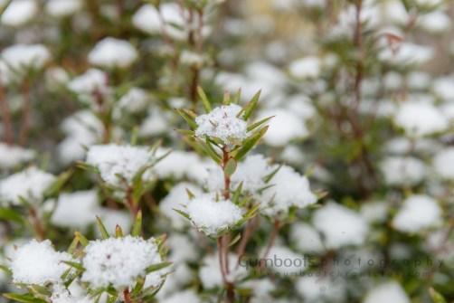millestrack snow_September 16, 2017-216