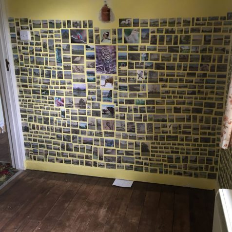 Image of walls covered with small pictues of birds cut out of magazines