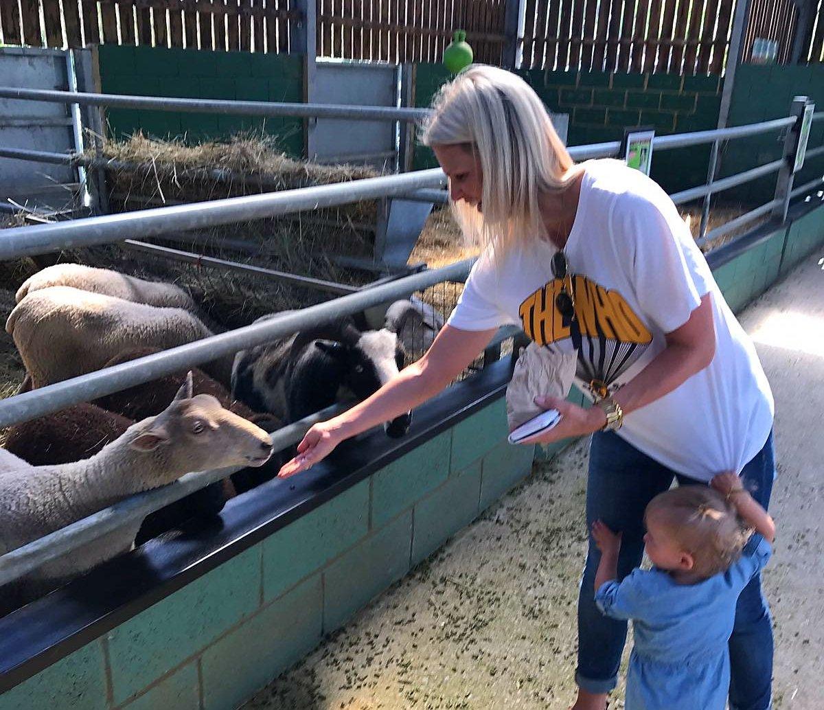 feeding sheep bocketts farm