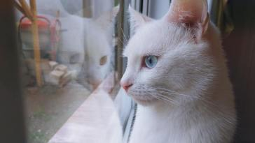 White cat look out of window best cat window perches