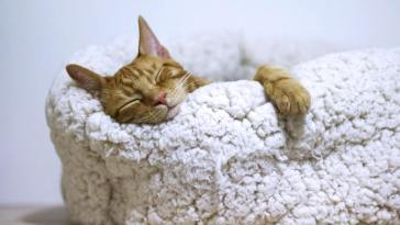 ginger cat sleeping on fluffy cat bed