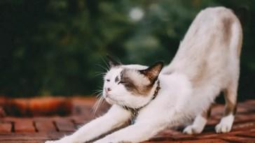 stretching white cat restraint bag