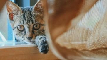 tabby cat lying on wooden cat tree