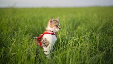 best escape proof cat harness