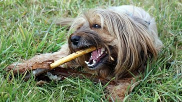 are dentastix good for dogs