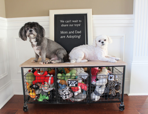 dog-adoption-pic