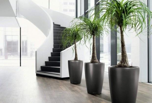 Las plantas de interior más fáciles de cuidar - pata-de-elefante-1024x694