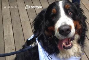 Uber hoy lleva perritos a domicilio