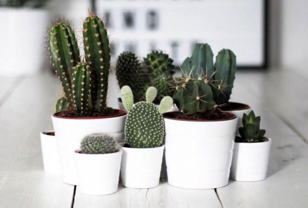 10 cosas que toda mujer debe tener en su hogar antes de cumplir 30 - plantas-1024x694