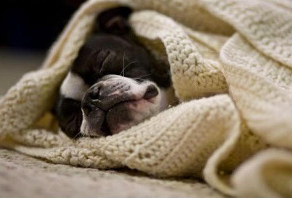 7 consejos para que tu perro no pase frío - cuidados-perro