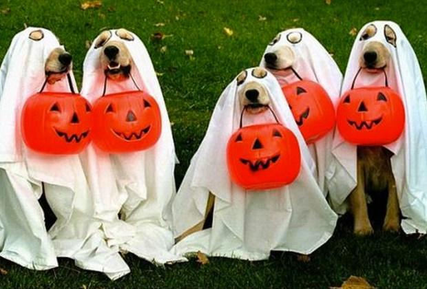 Los disfraces para perro más divertidos para este Halloween - disfraces-para-perros