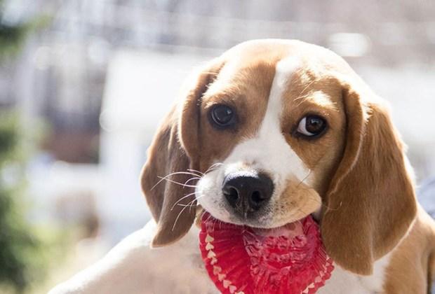 5 sorprendentes servicios en la CDMX para consentir a tu mascota - dogkery-1024x694