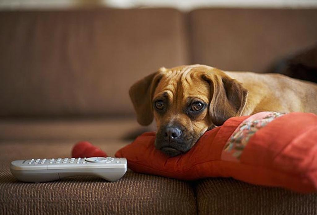 7 consejos para que tu perro no pase frío - sol-perro