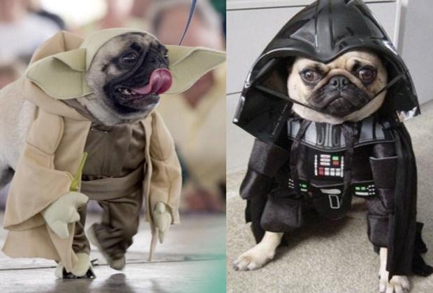 Los disfraces para perro más divertidos para este Halloween - starwars-disfraces-perros