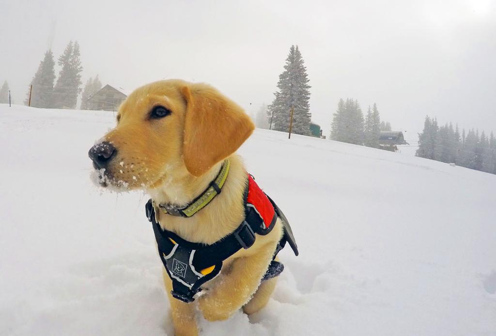 5 resorts dog-friendly para esquiar - dog-nieve