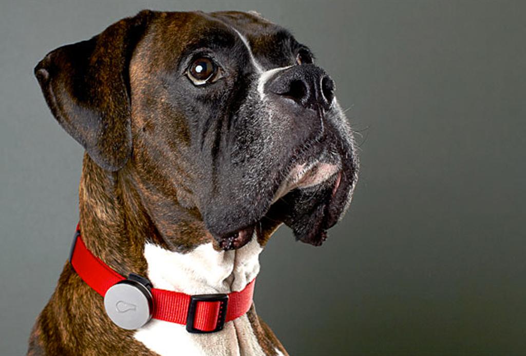 8 regalos que tu mascota amará en esta Navidad - regalos-perros-gadgets-4