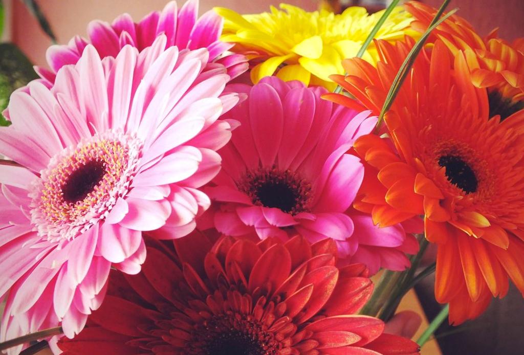 La guía infalible para saber el significado de las flores - flores-1