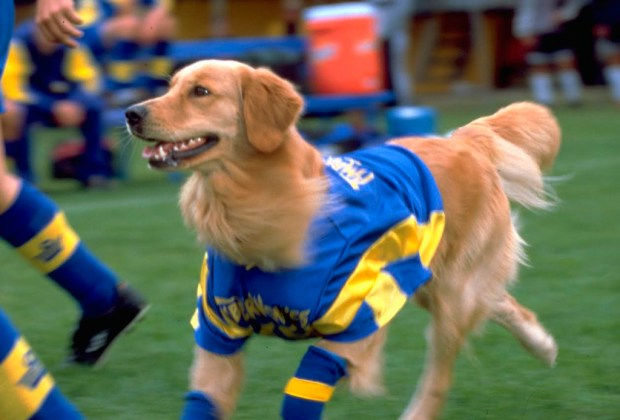 Los perros más famosos del cine - buddy-1024x694