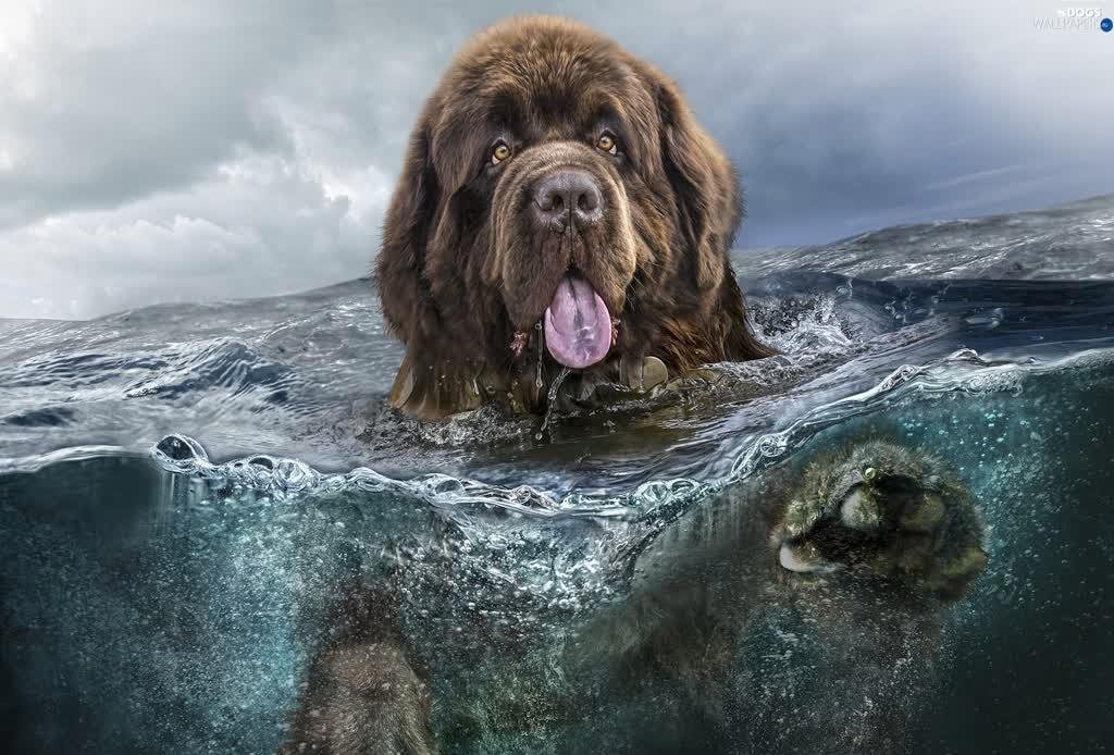 Las 10 razas de perro más grandes del mundo - perros-mas-grandes-del-mundo-3