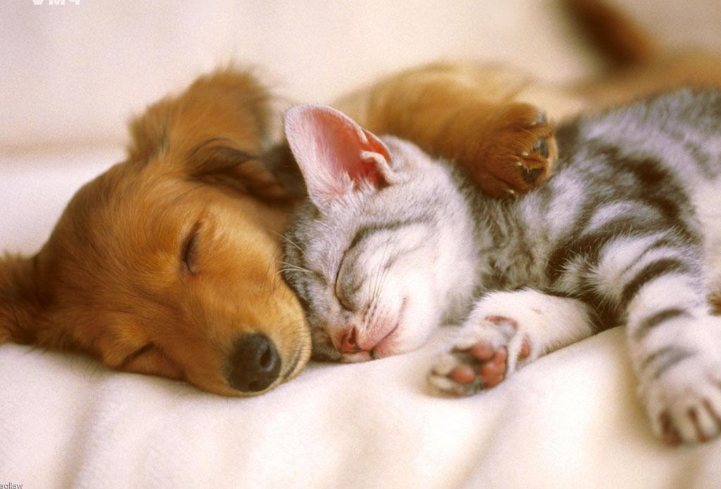 Estas razas de perros conviven perfectamente con los felinos