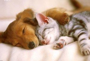 ¿Perro o gato? No tienes que decidir, estas razas conviven perfectamente con los felinos