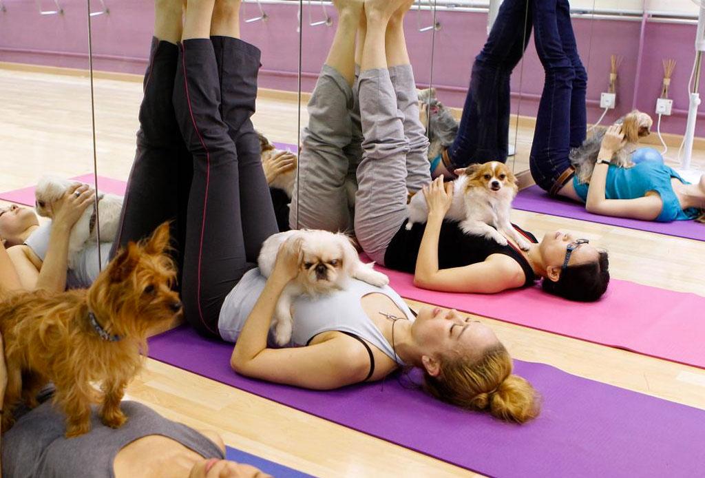 Doga: Una rutina de yoga para perros que puedes hacer en casa - doga-3