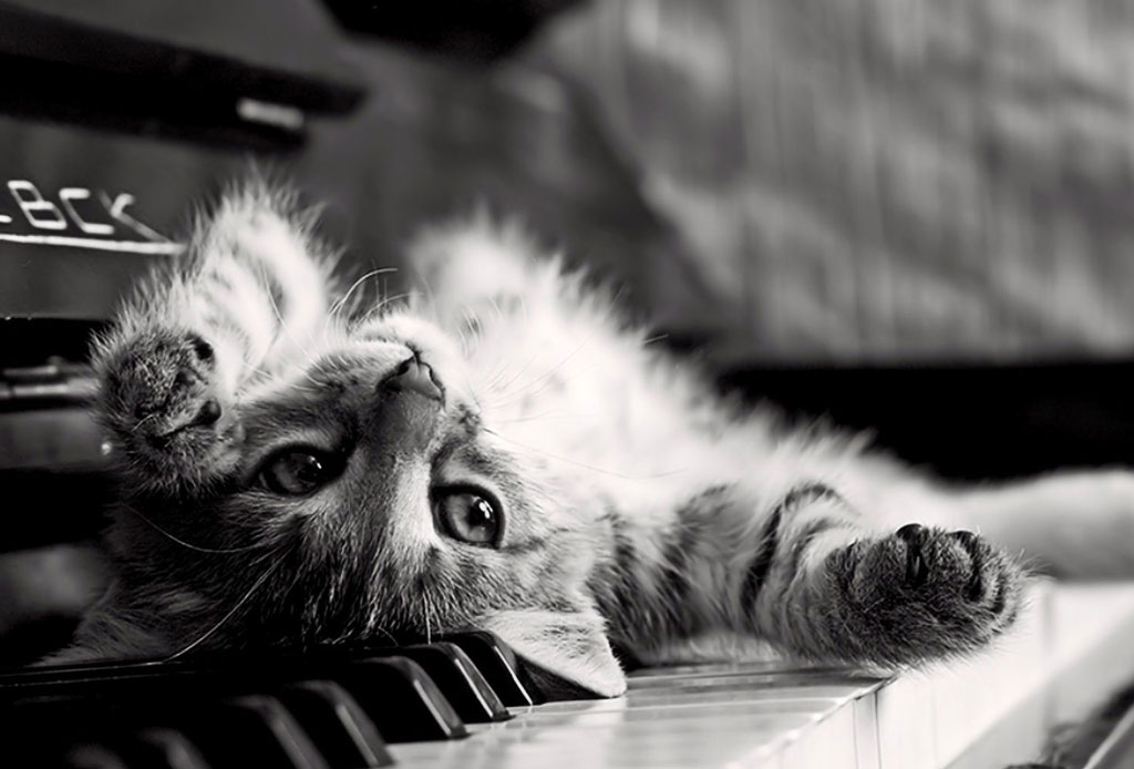 El ronroneo de los gatos puede calmar el dolor físico - musica-para-gatos-1024x694