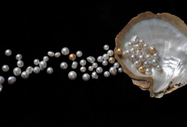 ca415b173a14 La guía que necesitas para comprar perlas auténticas - perlas1-1024x694