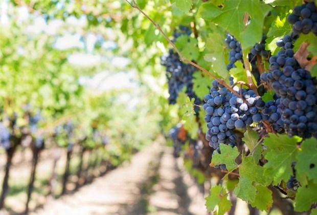 4 etiquetas de vino totalmente mexicano que debes probar - santaelena1-1-1024x694